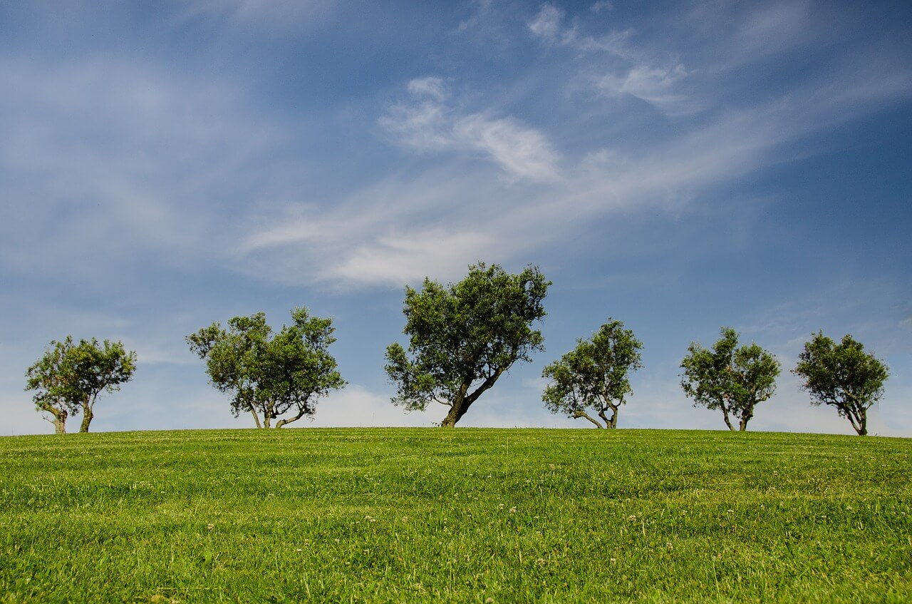 trees lined across a grass field