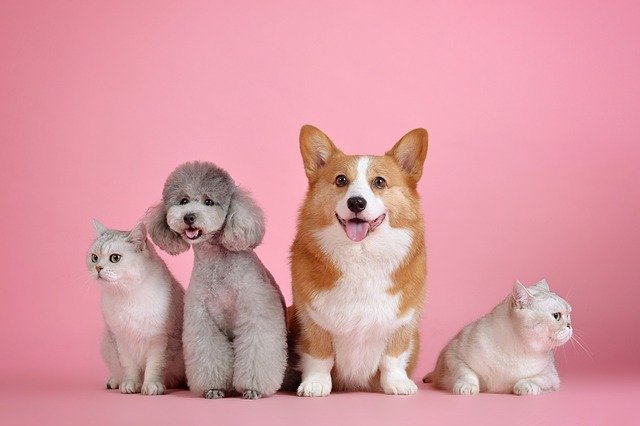 pink background with 2 dogs and 2 cats