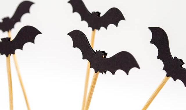 bats in roof